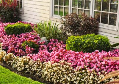 600x550 - bushes